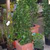 Feron Jardins - Jardinage